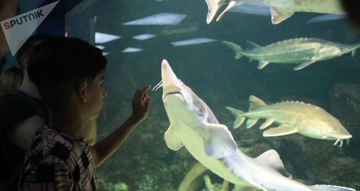 الطفل العراقي قاسم الكاظمي في متحف الأحياء المائية في موسكو