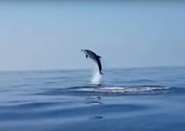 دلفين يقفز فرحا