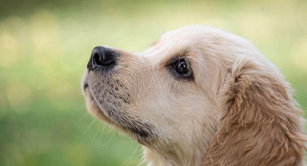كلب يثير إعجاب رواد التواصل الاجتماعي بسبب عيونه ورموشه (فيديو)