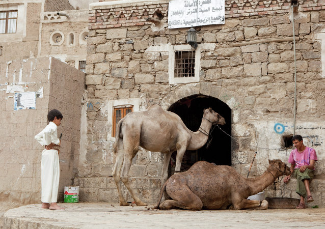مربي الجمال فى المدينة القديمة فى صنعاء اليمن