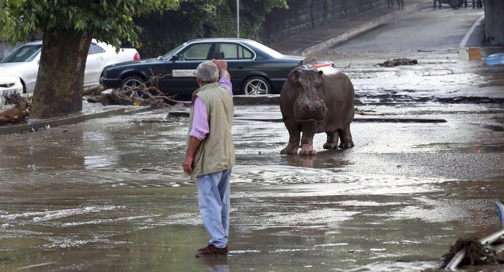 فيضان في تبليسي