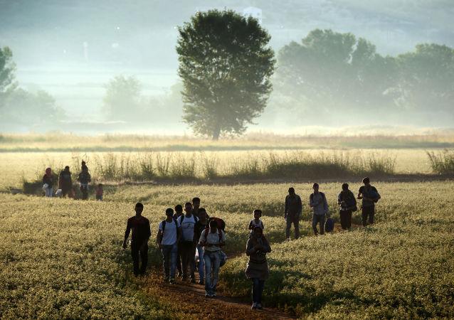 مهاجرين يعبرون الحدود عبر حقل من اليونان إلى مقدونيا، 29 أغسطس/ آب 2015.