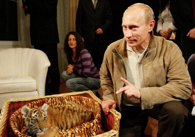 فلاديمير بوتين و الصحفيين مع النمر المهدى إليه