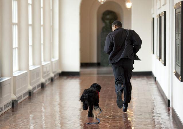 باراك أوباما وكلبه بو