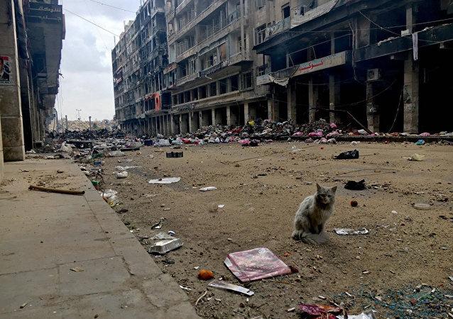 حلب السورية