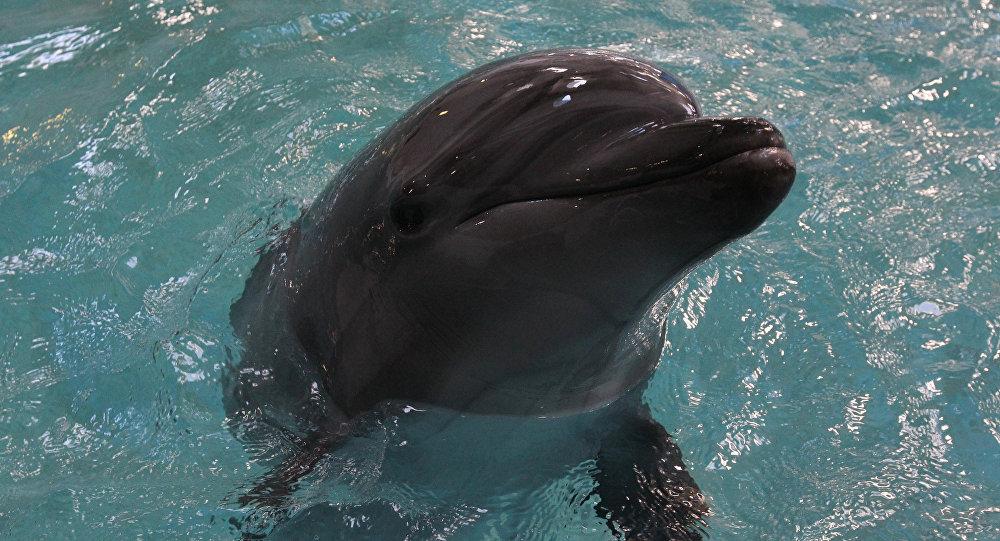 دلفين