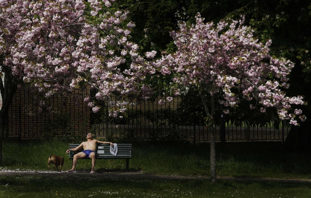 رجل يستجم تحت أشعة الشمس في لندن، 6 مايو/ آيار 2016.