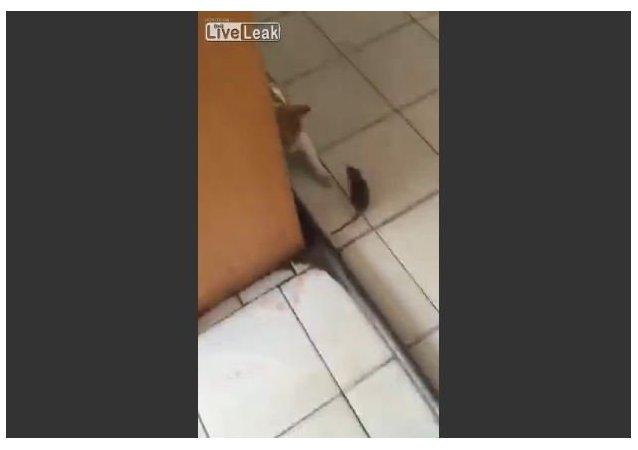 لعبة القط والفار: من يلحق بمن؟!