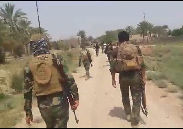 القوات العراقية تهزم داعش في جنوب الفلوجة