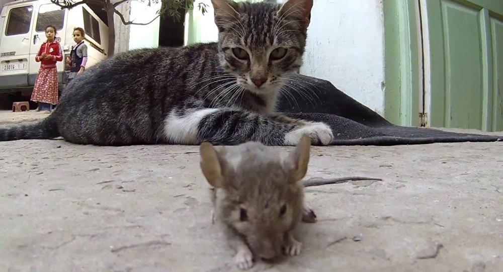 قط وفأر
