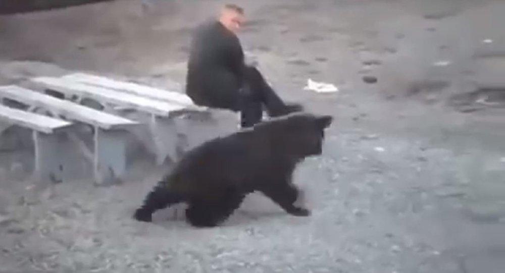 شاهد ماذا فعل هذا الرجل الروسى عندما اقترب منه دب مفترس