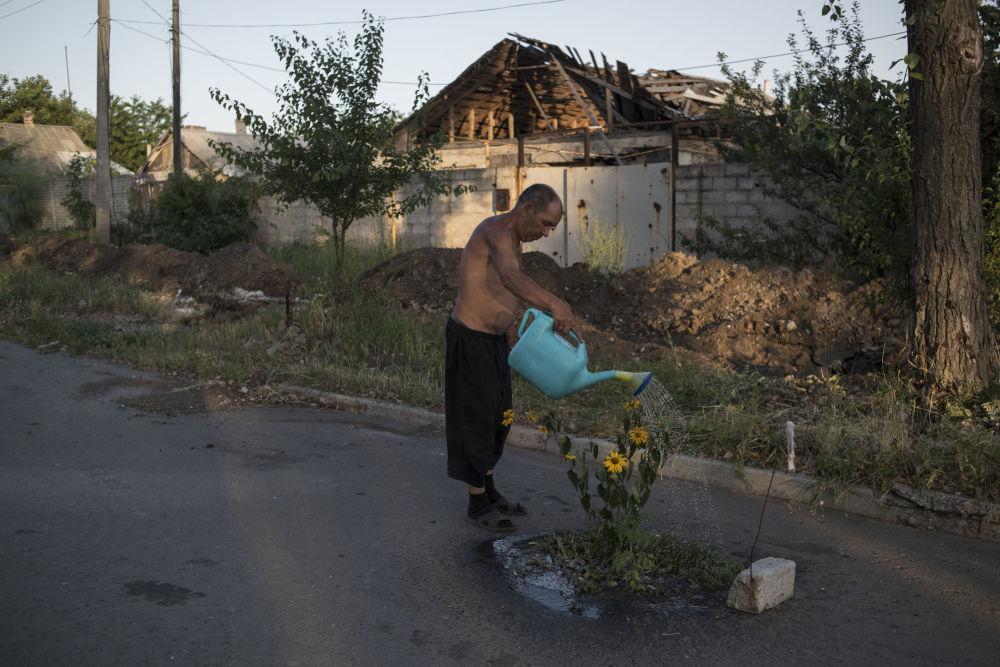 رجل يسقي أزهار عباد الشمس في قرية فيسيةلوي (سعيد) بمقاطعة دونيتسك، أوكرانيا