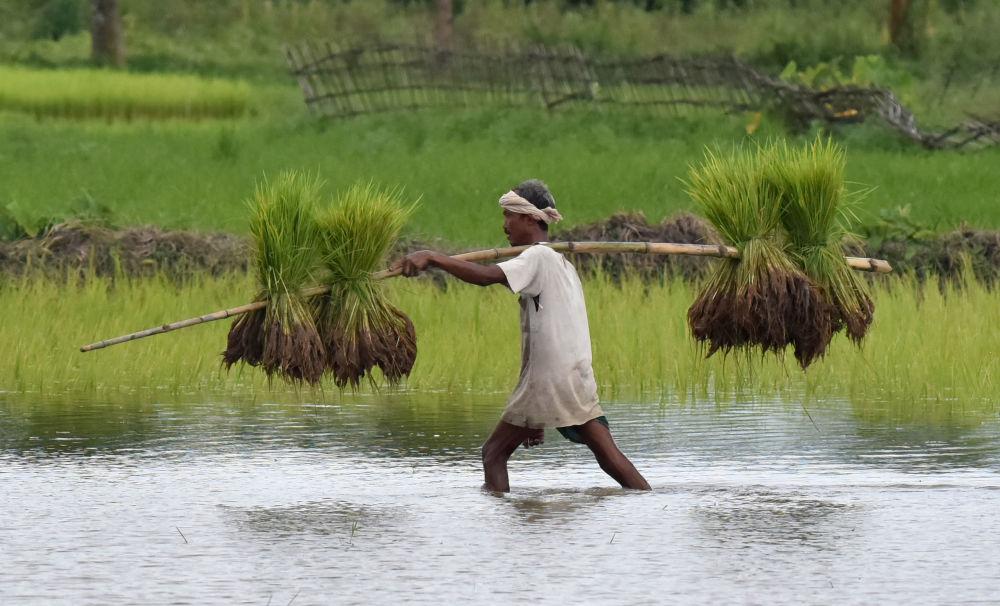 مزارع هندي في عمله، 10 أغسطس/ آب 2016.