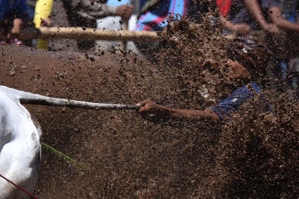 فارس يمسك خيله من الذيل خلال فعالية تقليدية بمناسبة انتهاء موسم حصاد الرز في سومطرة الغربية، إندونيسيا 13 أغسطس/ آب 2016