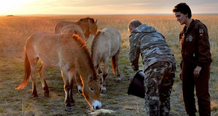 الرئيس الروسي فلاديمير بوتين يطعم الخيول البرية في المحمية الطبيعية في أورينبورغ