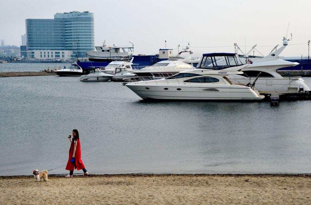 فتاة تتمشى مع كلبها على الشاطئ على خلفية اليخوت في الميناء الرياضي في فلاديفوستوك.
