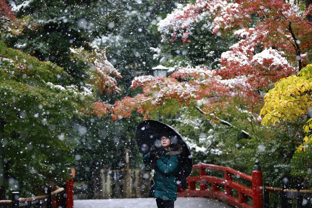 زائر يلتقط صورة على خلفية ثلج متساقط في حديقة للمعبد Tsurugaoka Hachimangu Shrine بالقرب من طوكيو. ذلك أن أهل طوكيو استيقظوا على أول ثلج يسقط في شهر نوفمبر منذ 50 عاماً، 24 نوفمبر/ تشرين الثاني 2016