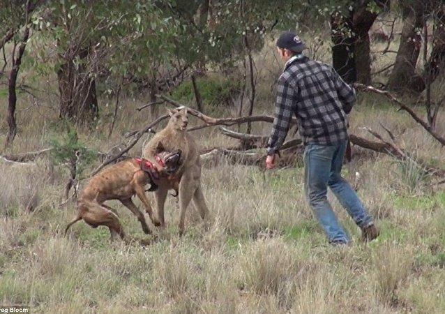 أسترالي ينقذ كلبه
