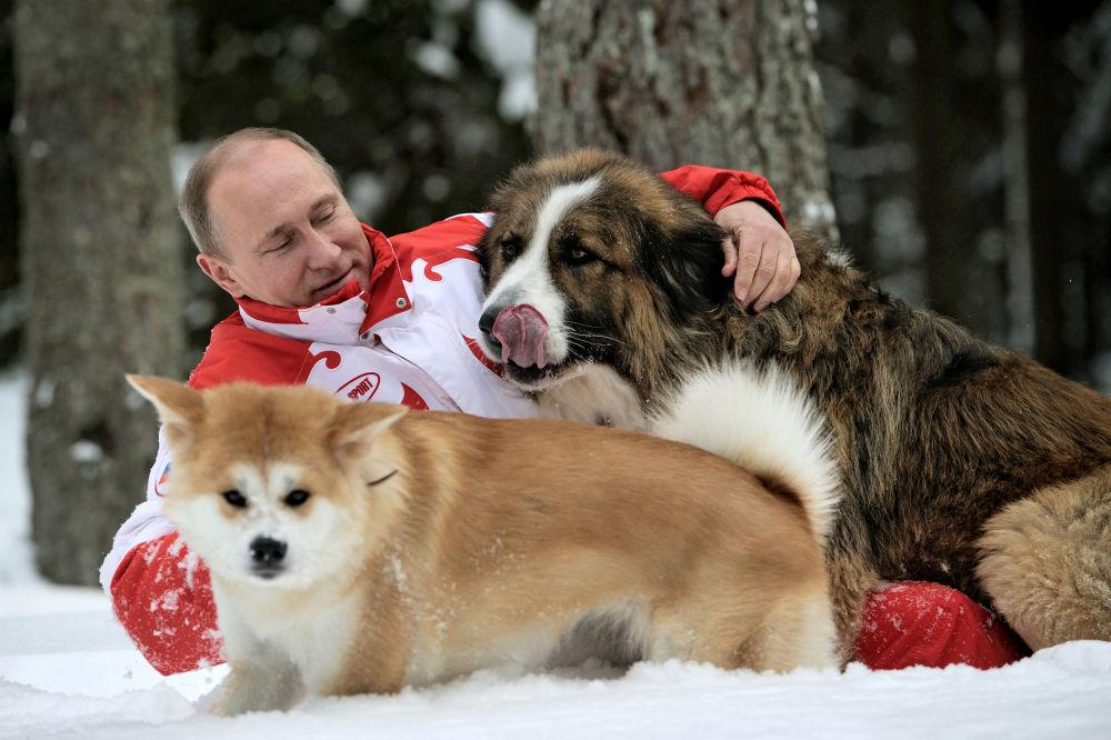 الرئيس الروسي فلاديمير بوتين يلاعب كلابه يوماي و بافي بمقاطعة موسكو