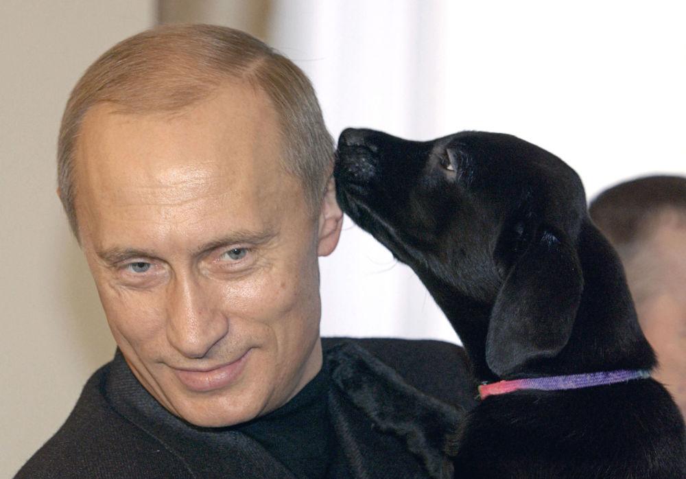الرئيس فلاديمير بوتين وجرو كلب اللابرادور كوني الخاص به، الذي أهداه لفتاة صغيرة كاتيا من سمولينسك.