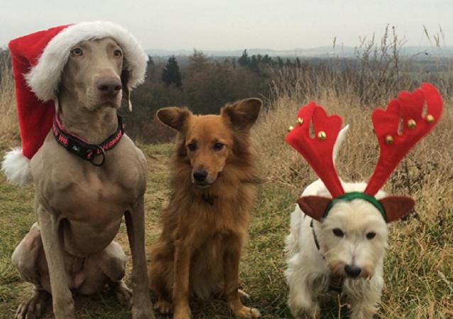 كلاب وقطط عيد الميلاد