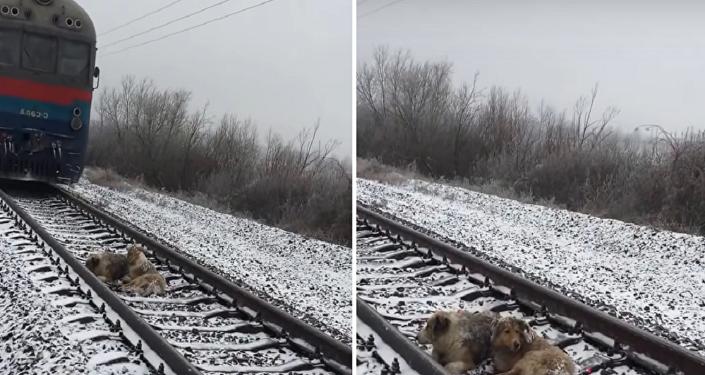 كلب يقضي يومين على القضبان لإنقاذ صديقته