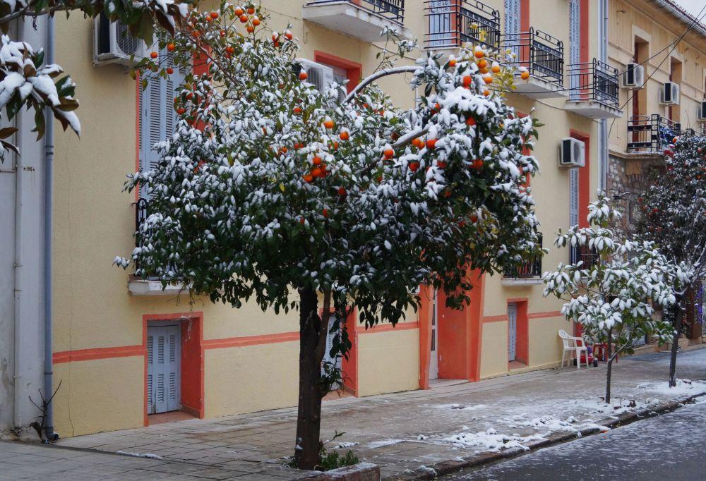 أشجار خضراء مغطاة بالثلوج في أثينا
