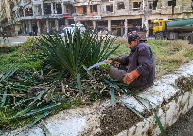 رجل يقوم بتقليم الأشجار بحي الناظرية في حلب، سوريا