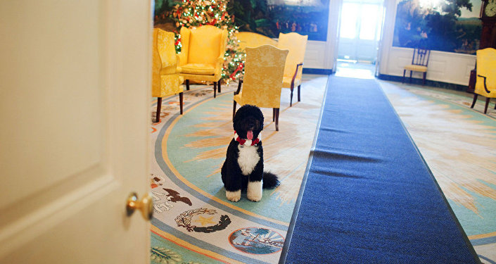 كلب الرئيس الأمريكي باراك أوباما