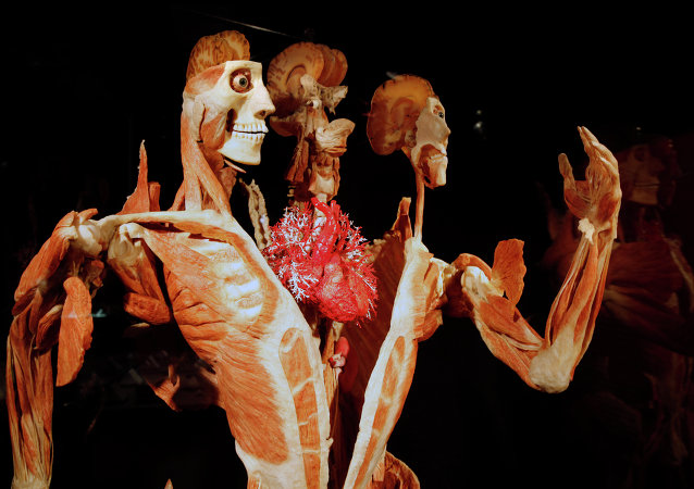 Gunther von Hagens' Body Worlds & The Story of the Heart on exhibit at the Buffalo Museum of Science in Buffalo, New York