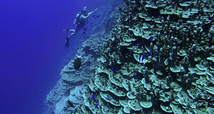 شعب مرجانية