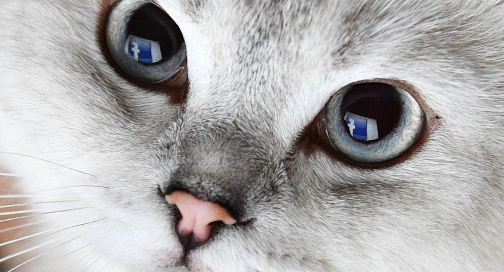 إشارة صفحة موقع للتواصل الاجتماعي فيسبوك تنعكس في عيون قط
