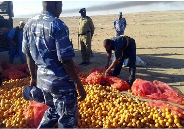 عملية إتلاف البرتقال المصري