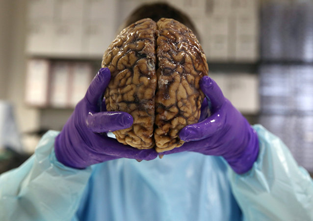 دماغ بشري