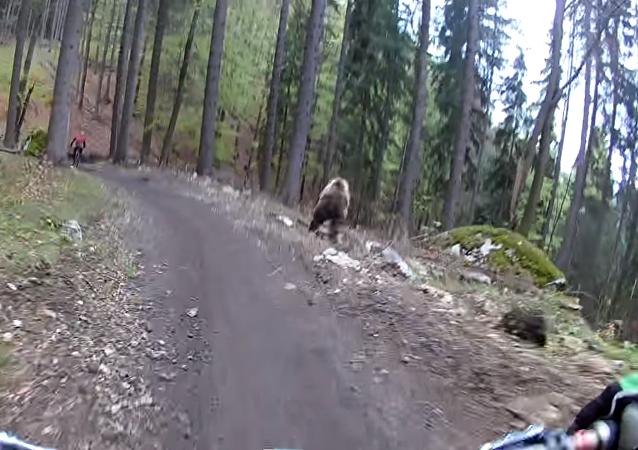 هجوم الدب
