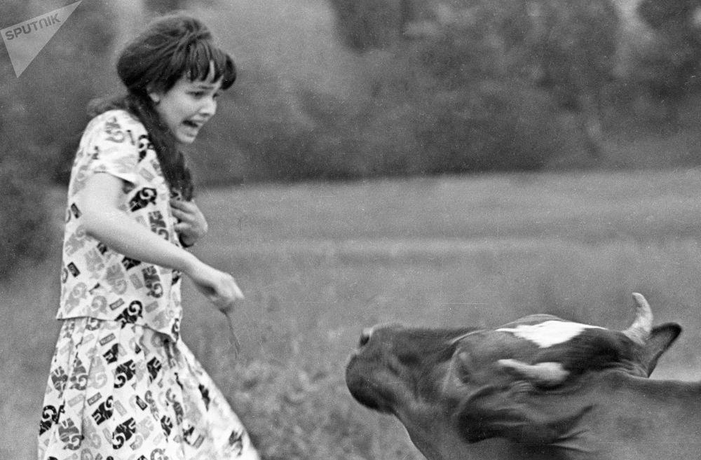 فتاة تهرب من البقرة
