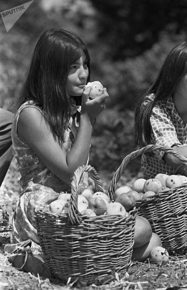 فتاة من فريق الإنشاء في معهد باشكيريا التربوي أثناء جمع التفاح  في المزرعة