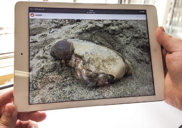 Фотография загадочного существа, которое выбросило на берег пляжа в Калифорнии
