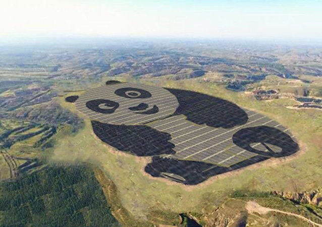طاقة شمسية على شكل باندا في الصين