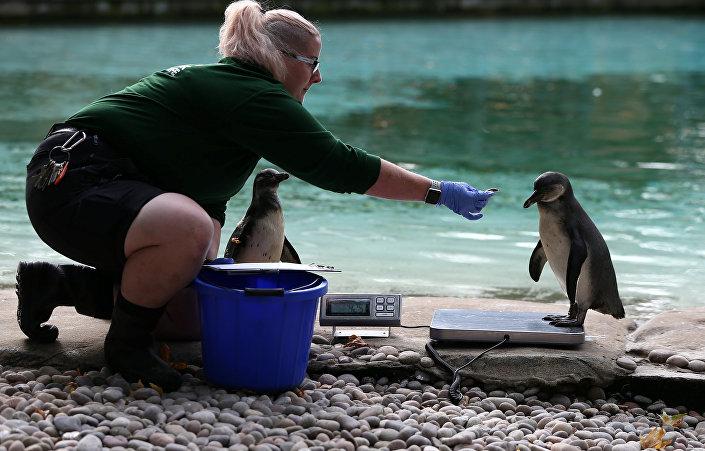 تحاول جذب البطريق إلى الميزان