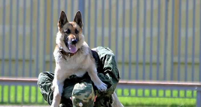 تدريبات عسكرية للكلاب في روسيا