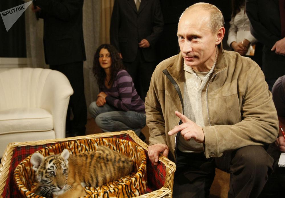 فلاديمير بوتين ونمر الآمور، الذي أهدي إليه بمناسبة عيد ميلاده،  ومن ثم تم تسليمها إلى حديقة نوفو-أوغاريفو، روسيا