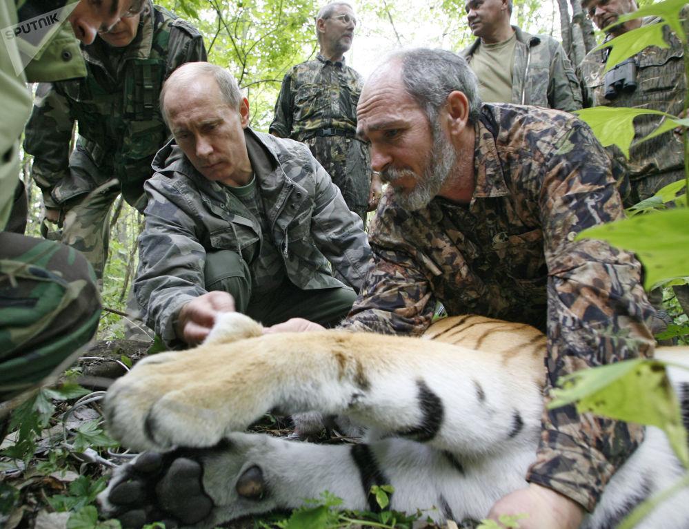 الرئيس فلاديمير بوتين خلال خلال زيارته لمحمية أوسوريسك الطبيعية في أقضى شرق روسيا