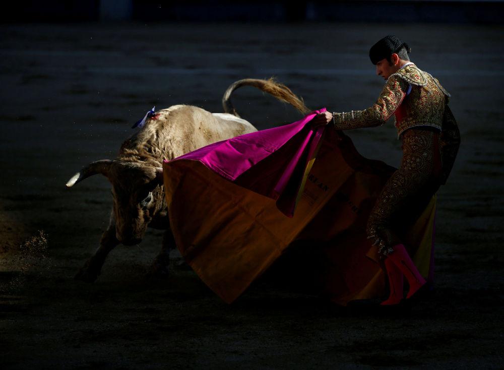 مصارعة الثيران في مدريد، إسبانيا 8 أكتوبر/ تشرين الأول 2017