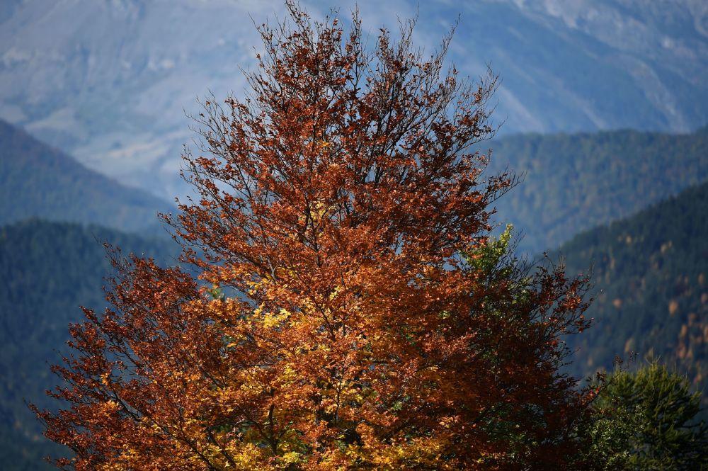 شجرة مع أوراق الخريف في جبال الألب الفرنسية