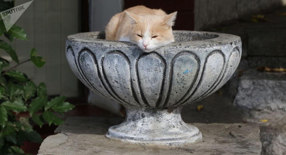قط في مدينة غورزوف