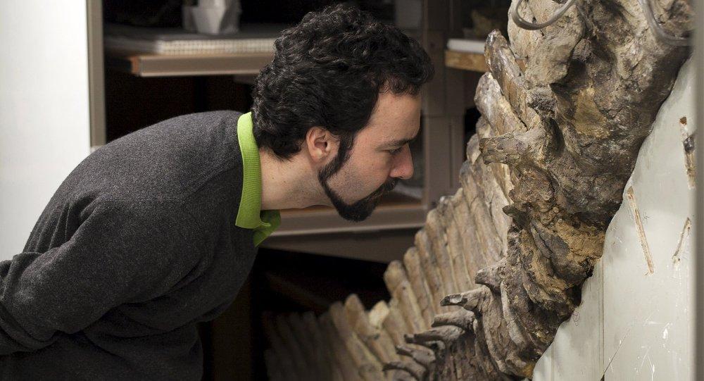 سيرجيو بيرتازو، عالم الفيزياء الطبية الحيوية في كلية إمبريال في لندن، يدرس حفرية في متحف التاريخ الطبيعي في لندن في هذه الصورة غير مؤرخة المقدمة من قبل لوران ميكول، 9 يونيو 2015
