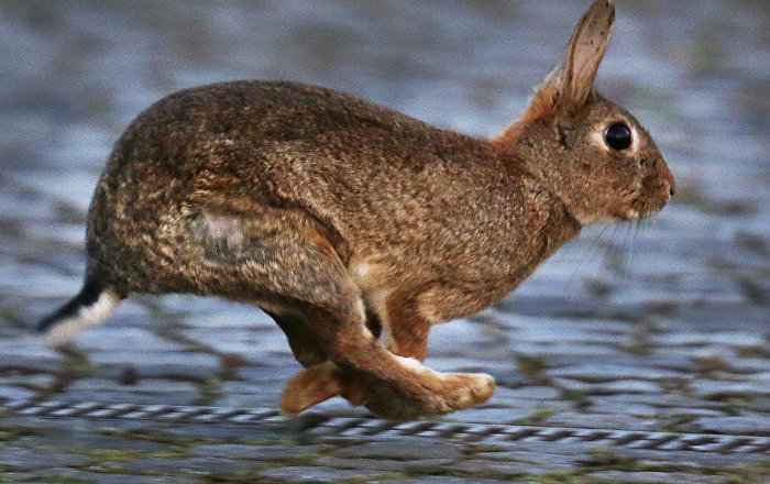 سباق الأرانب على تناول الطعام… فيديو