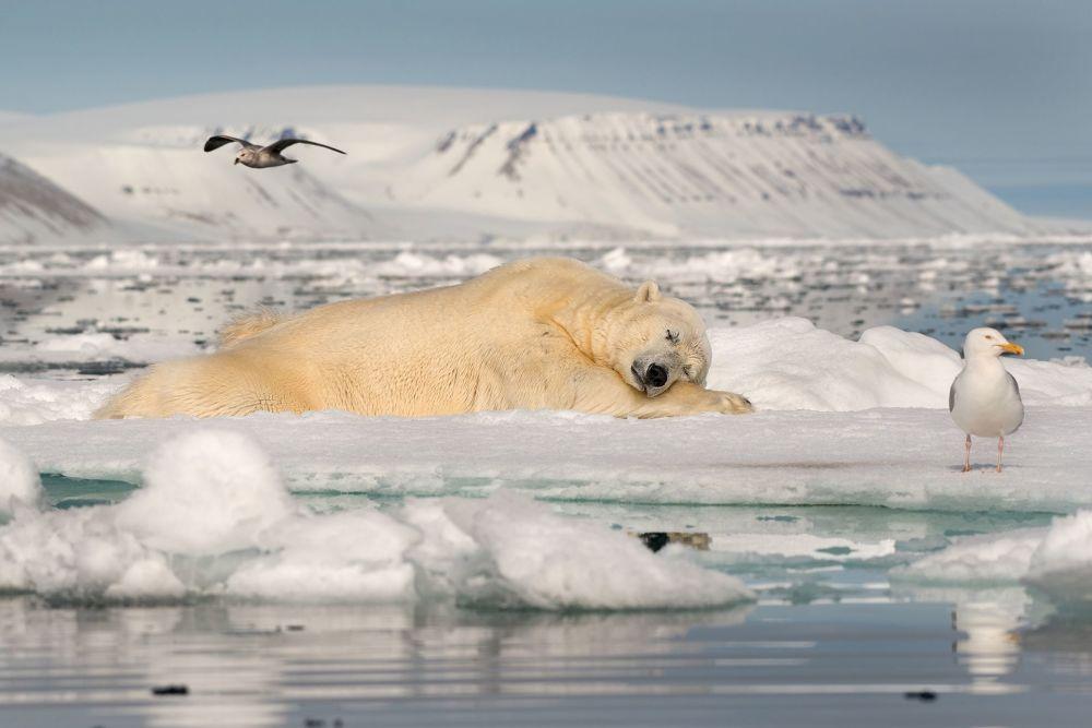 صورة بعنوان الحلم على جليد البحر للمصور رواي غاليتز، الحائزة على المرتبة الأولى في فئة الجليد الهش