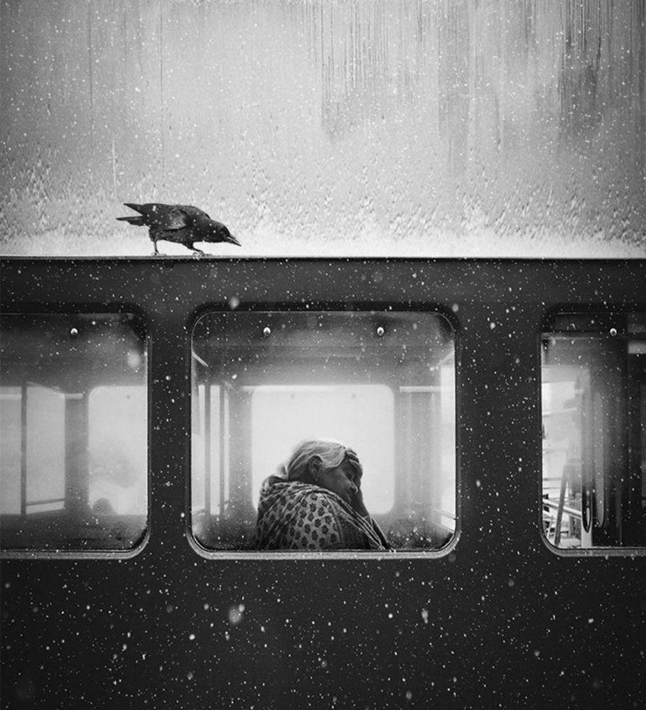 صورة بعنوان غراب من لفيف للمصور جاك سافاج، الحائزة على المرتبة الأولى في فئة اللون العام